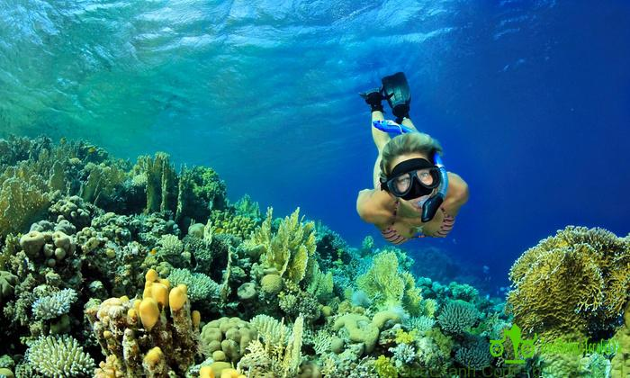 Amazing Snorkeling Full Day Tour